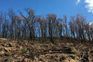 UK Chapter President volunteers in regional Victoria for wildlife affected by the recent bushfires